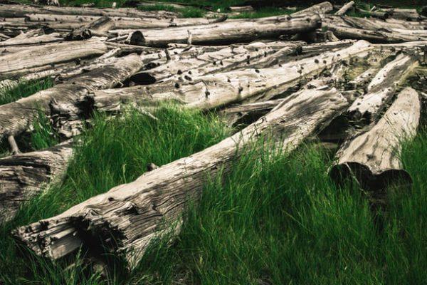 fallen tree trunks